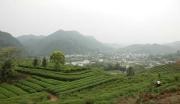 义龙新区新桥有机优质茶加工园项目