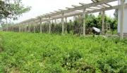 遵义县山盆镇金银花种植深加工项目