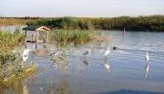 七里海鸟类自然保护区