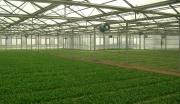新疆兵团特色农产品加工建设基地
