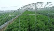 喀什特色果蔬精深加工项目