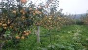 喀什天然果胶提取项目