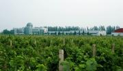 石河子南山新区葡萄酒庄园项目