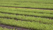 康乐县苏集河流域云杉育苗产业园