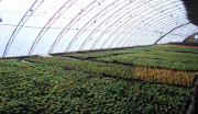 定西市临洮县洮河百里绿色蔬菜瓜果长廊