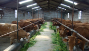 高台县中央储备肉活畜(肉牛)储备基地建设