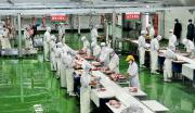肉羊精深加工生产线及肉牛繁育基地