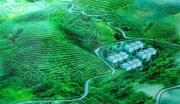 广西百色油茶种植与深加工