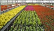 福建福州福人花卉基地项目