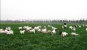 怀化鹤城区农牧经济产业园建设项目急彩立方平台登录
