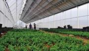 河南济源绿色有机农产品生产基地