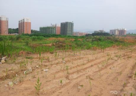 通山县经济开发区B4地块实景图
