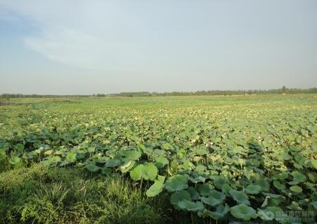 湖北孝感朱湖现代农业项目实景图