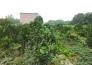 阳新县城东新区6号地块实景图