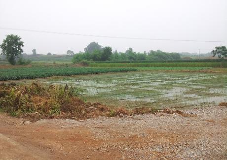 阳新县城东新区14-1号地块实景图