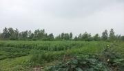 荆门市掇刀区双碑循环农业示范园建设项目