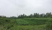 荆门市农业生物科技产业园项目