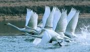 天鹅洲生态旅游区项目