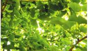 保山市腾冲县植物油产业系列开发项目