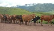 保山市畜产品交易中心建设项目