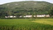 巧家县白鹤滩野鸭村生态农业观光园建设