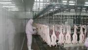 武汉新洲区禽类屠宰及深加工项目