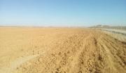 陕北榆林沙漠土地出租