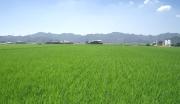 广东清远英德市500亩农场转让