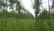 广西桂林临桂县竹柳林场整体转让
