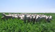 内蒙古鄂尔多斯市现代农牧示范园500亩土地