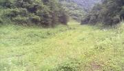 7000亩林地转让