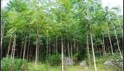 有块好地.农田1000亩.林地9000亩,含水库.