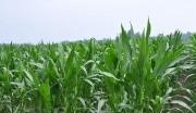 内蒙赤峰市10000亩水电配套优质耕地