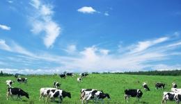 奶牛产业链