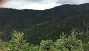 云南省大理州云龙县1052亩优质林地转让