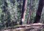 云南省大理州云龙县1052亩优质林地转让实景图
