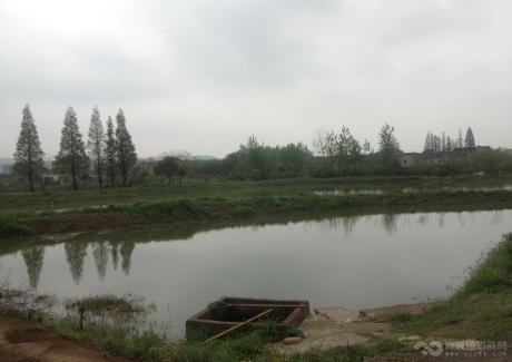 南京市江宁区陶吴镇养猪场,鱼塘转让实景图