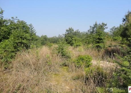江西有300—10000亩不等面积的山地、旱田和竹林出租或转让实景图