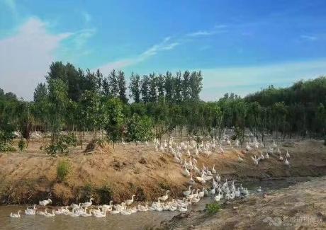 商丘升升生态农场实景图