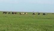 吉林白城镇赉县45000亩农用地转让