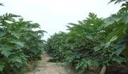 海南乐东养老休闲旅游4800亩一手超大土地