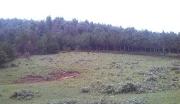一次性买断,云南优质林地低价出售