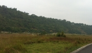 1400亩林地出租
