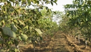 云南土地林地2800带林权证转让,配套种植