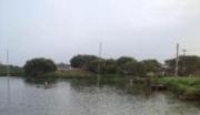 广东惠州汝湖镇70亩鱼塘紧急转让