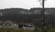 广东台山市水步镇350亩山林地紧急转让