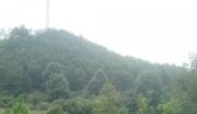 江西吉安安福县1000亩山地紧急转让