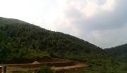 广西玉林1000亩松树林地紧急转让