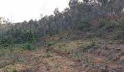 云南楚雄武定县200亩林地紧急转让