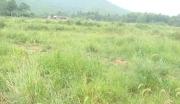 江西安福县130亩山地转让